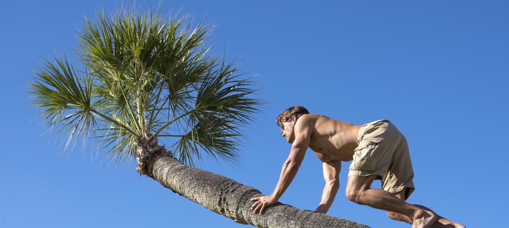 Florida Dreizackpalme